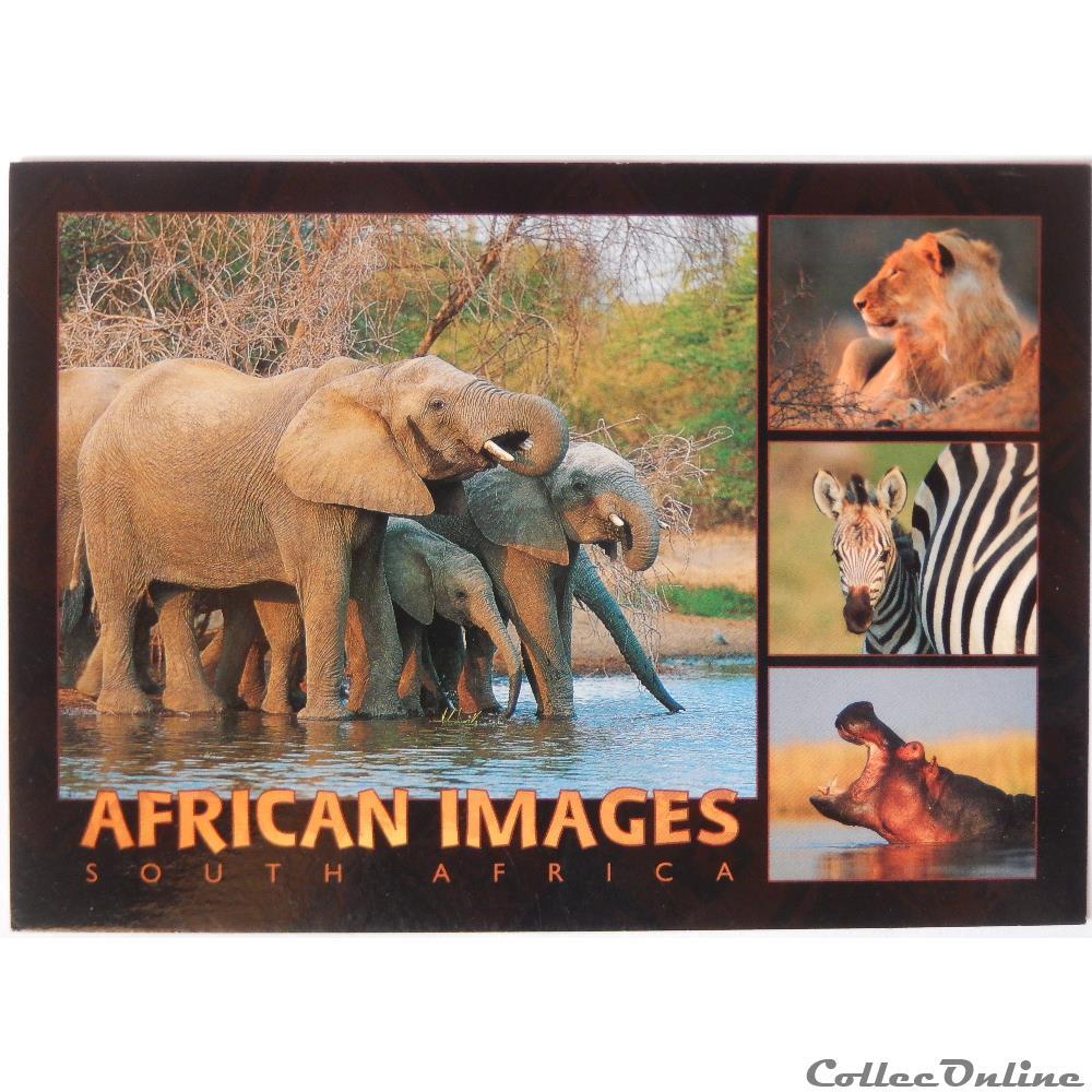 Carte Postale Afrique Du Sud.Cp D Afrique Du Sud Cartes Postales Afrique