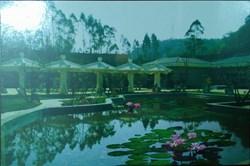 Potted Landscape