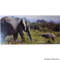 CP Animaux, Eléphants