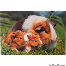CP Animaux, Hamsters