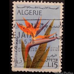 Algérie 00571 fleur oiseau de paradis 1....