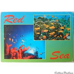 CP d'Egypte, la Mer Rouge