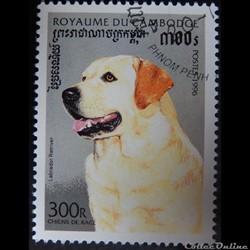 Cambodge 01365 chien Labrador Retriver 2...