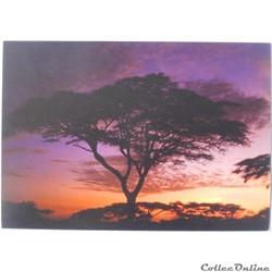 CP de Tanzanie, Serengeti