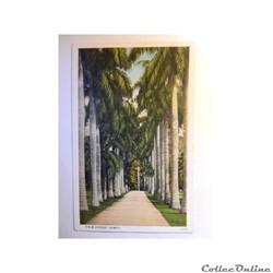 CPA de Hawaï, Palm avenue.