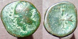 Petelia bronze