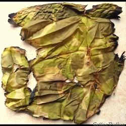 morceau de parachute camouflé US