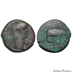 Claude / Alexandrie, Egypte / Hippopotam...