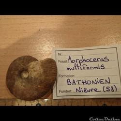 Morphoceras multiformis