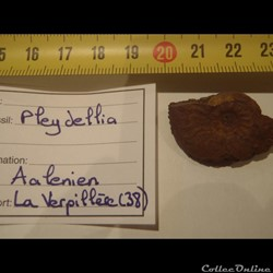 Pleydellia