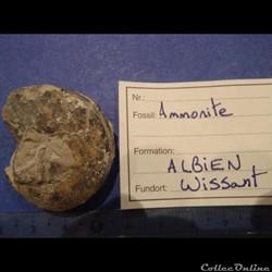 Ammonite indéterminée 16