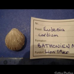 Eudesisa cardium